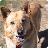 Adopt A Pet :: Cowboy Joe - Neosho, MO
