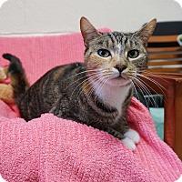 Adopt A Pet :: Bailey - Mt Vernon, NY