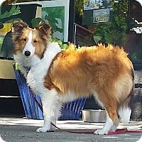 Adopt A Pet :: Cooper V - Mission, KS