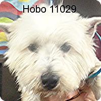 Adopt A Pet :: Hobo - baltimore, MD