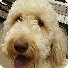 Adopt A Pet :: Maggie
