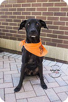 Labrador Retriever Mix Dog for adoption in Mooresville, North Carolina - Gage