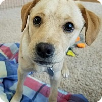 Adopt A Pet :: Eileen - ADOPTION PENDING - Livonia, MI