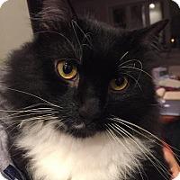Adopt A Pet :: Kevin - Philadelphia, PA