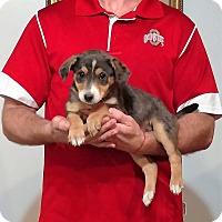 Adopt A Pet :: Paris - South Euclid, OH