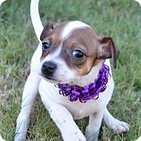 Adopt A Pet :: Malena ~ ADOPTED! - Brattleboro, VT