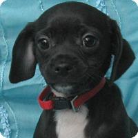 Adopt A Pet :: Waylon Lula - Cuba, NY