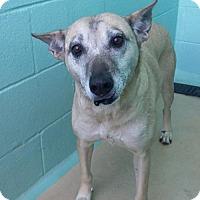 Adopt A Pet :: Linda - Manteo, NC