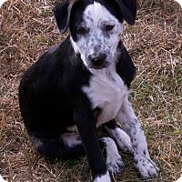 Adopt A Pet :: geraldine - Staunton, VA