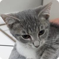 Adopt A Pet :: Hannah - Cincinnati, OH
