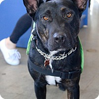 Adopt A Pet :: Rocky - Los Angeles, CA