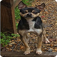 Adopt A Pet :: Toby 2 - Shreveport, LA