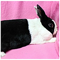Adopt A Pet :: Thumper - Forked River, NJ