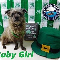 Adopt A Pet :: Baby Girl - Arcadia, FL