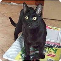Adopt A Pet :: Spot - Montreal, QC
