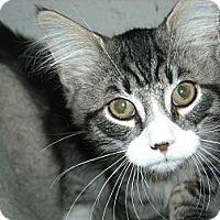 Adopt A Pet :: Percy & PJ - Arlington, VA