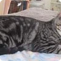 Adopt A Pet :: Tazzie - Davis, CA