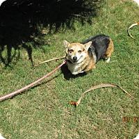 Adopt A Pet :: Tiny (Tina) - Lomita, CA