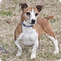 Adopt A Pet :: Jason - Cashiers, NC