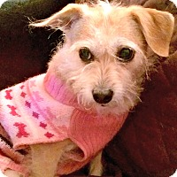 Adopt A Pet :: Sadie is quiet - Redondo Beach, CA