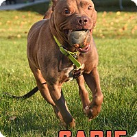 Adopt A Pet :: Sadie - Cary, IL