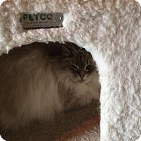 Adopt A Pet :: Anna - N. Berwick, ME