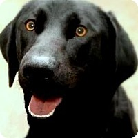 Adopt A Pet :: BAILEY(PLAYFUL-FUN-SO SMART!! - Wakefield, RI