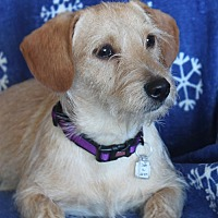 Adopt A Pet :: Darby - Wichita, KS