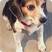 Adopt A Pet :: Minnie - Houston, TX