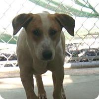 Adopt A Pet :: Barley - Jacksonville, TX