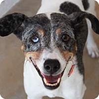 Adopt A Pet :: COCO - Kyle, TX