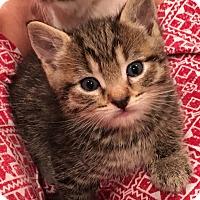 Adopt A Pet :: Apollo and Athena - Kirkland, WA