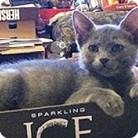 Adopt A Pet :: Nadia - Metairie, LA