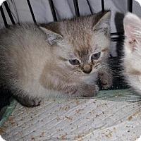 Adopt A Pet :: Blake - Brainardsville, NY
