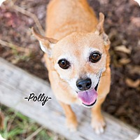 Adopt A Pet :: Polly - Leander, TX