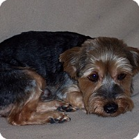 Adopt A Pet :: Carver - CONOVER, NC