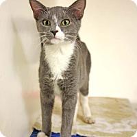 Adopt A Pet :: Delphyne - Harrisonburg, VA