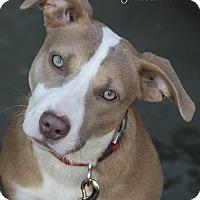 Adopt A Pet :: Davina - Middletown, DE