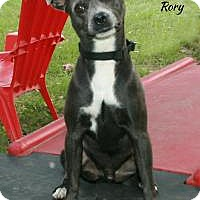 Adopt A Pet :: Rory - Tomball, TX