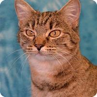 Adopt A Pet :: Doogie - Eureka, CA