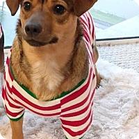 Adopt A Pet :: Nero - Ft. Lauderdale, FL