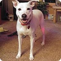 Australian Cattle Dog Mix Dog for adoption in Edina, Minnesota - Jynx  D161216