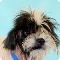 Adopt A Pet :: Johnny - Waldorf, MD