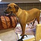 Adopt A Pet :: C- Joy