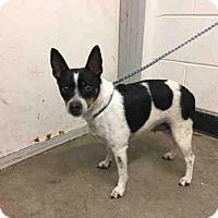 Adopt A Pet :: BIANCA - San Martin, CA