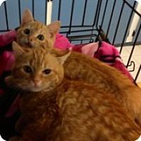 Adopt A Pet :: Timone & Pumba - Aiken, SC