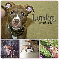 Adopt A Pet :: London - Shavertown, PA