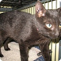 Adopt A Pet :: Leona - Shelton, WA