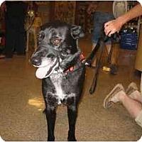 Adopt A Pet :: Phoebe - Scottsdale, AZ