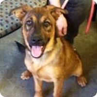 Adopt A Pet :: Hanley - Henderson, KY